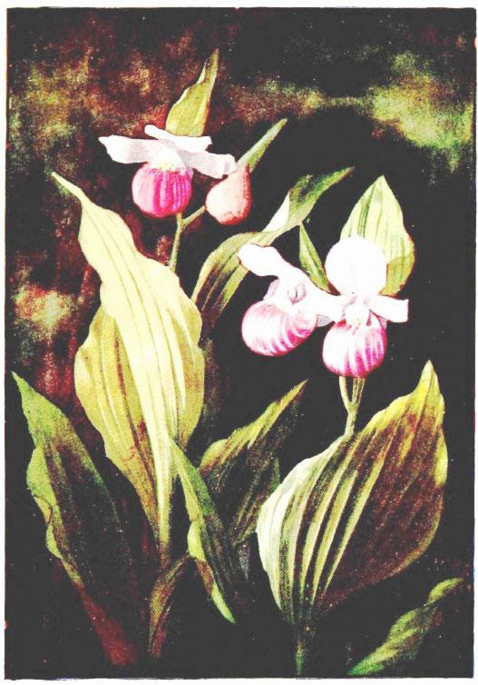 Botanical3