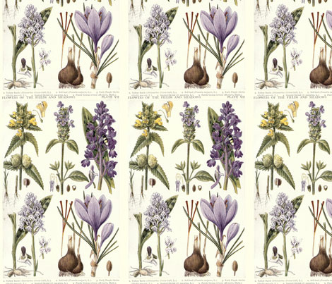 Spoonflower-Antique-Botanical-by-Ginanelson