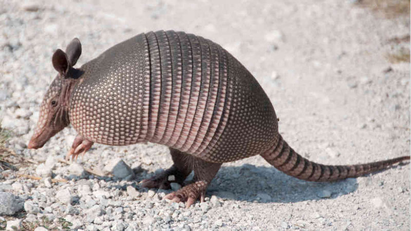 Cutting-Table---Armadillo